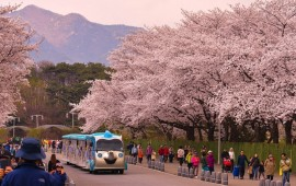 THE BEST TIME TO VISIT SOUTH KOREA