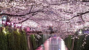 JAPAN 5DAYS-SPRING