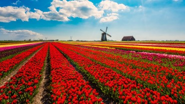 Europe-Tulip 8Days